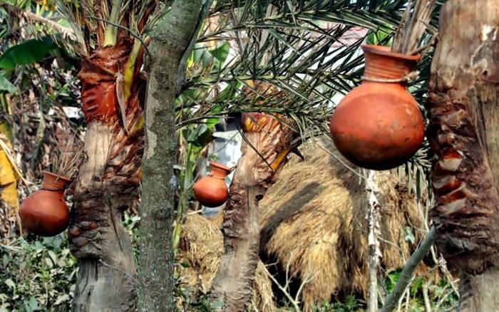 গ্রামবাংলার ঐতিহ্য খেজুরের রস